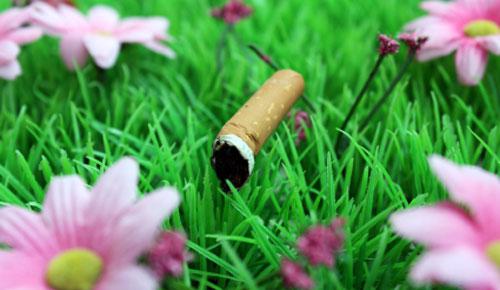 http://fioriefoglie.tgcom24.it/wpmu/files/2012/09/sigaretta500.jpg